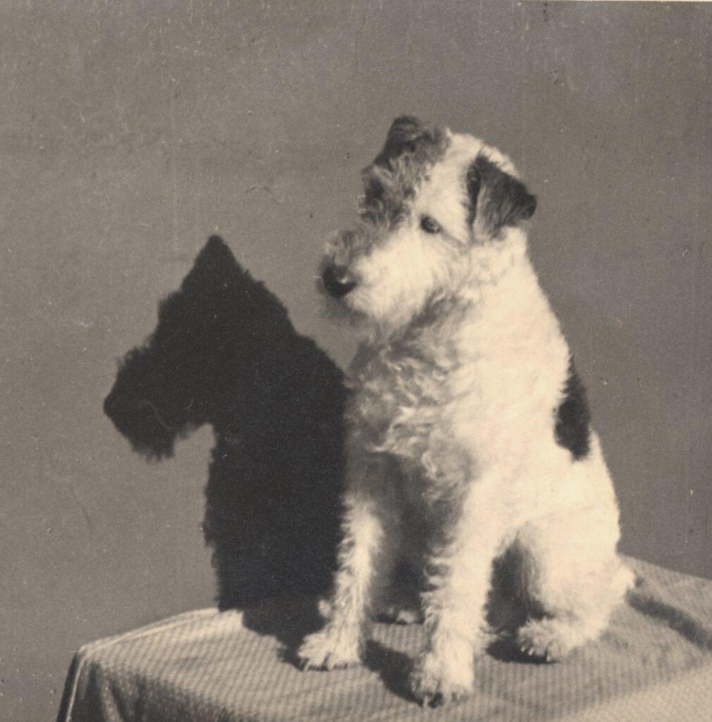 La imagen tiene un atributo ALT vacío; su nombre de archivo es Fo006114.-BOBBY.-PERRO-FOXTERRIER.1936.-FOT.-WALTER-OSCAR-JABLONOSKY.-COLECC.-JAPCRUZ-1010x1024.jpg