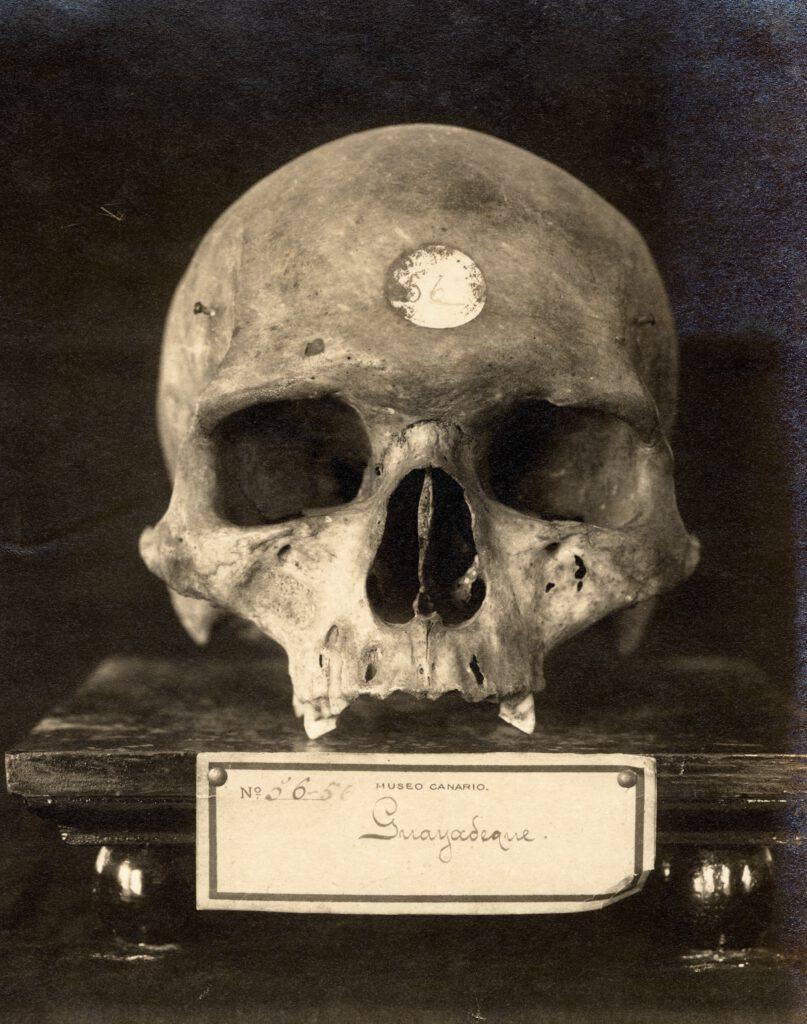 La imagen tiene un atributo ALT vacío; su nombre de archivo es Fo012521.CRANEO-DE-CANARIO-DE-GUAYADEQUE.-1925-30.-TEODORO-MAISCH-COLECC.-CABILDO-GC-807x1024.jpg
